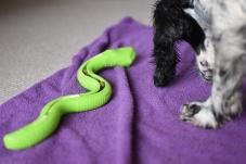 Snake (5)